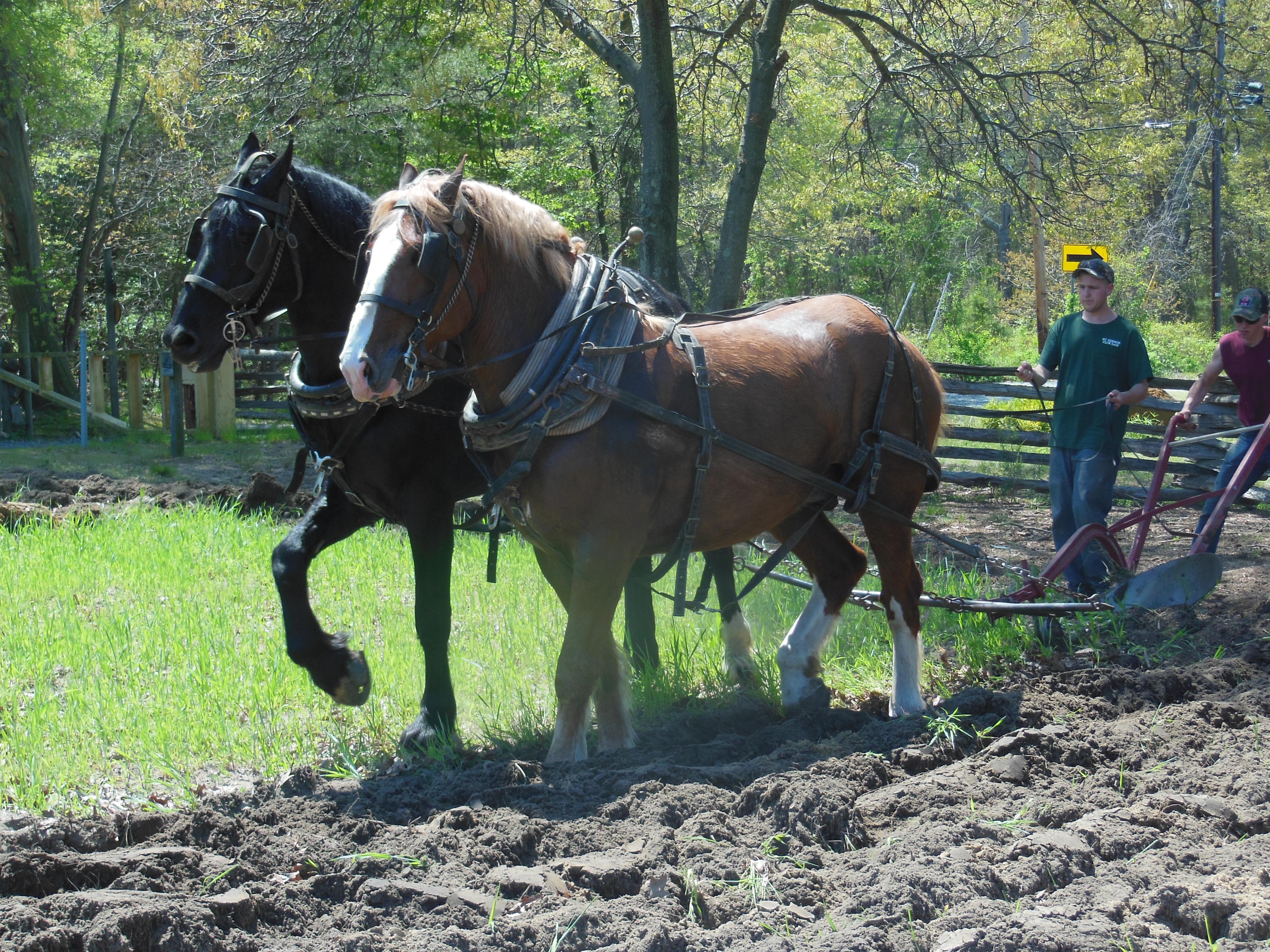 Plowing 2015